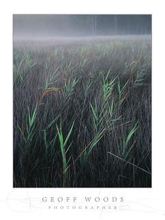 Reeds Swansea Hds.