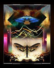 Butterfly flight (mfuata) Tags: butterfly kelebek flight uçuş light ışık classic klasik space uzay freedom özgürlük