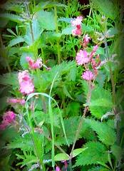 Photo of English wildflowers