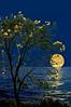 في آخر #الليل تُفتح #أبواب #السماء..مدوا #أكفكم و #أكثروا من #الدعاء،  فإن #الله لا #يخيب #عبدًا #رجاه. (اللّهُمـَّ آرزُقنآ حُـسنَ ) Tags: أبواب السماء أكفكم يخيب رجاه الله عبدًا الدعاء الليل أكثروا