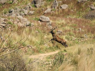 Argentina Red Stag Hunt Cordoba 18
