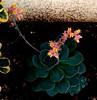 Dance of fireflies (ezgimenevse) Tags: onlythebestofnature
