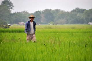 chiang mai - thailande 5
