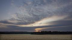 Sunrise on Wheat Field (stephenisabellemaggie) Tags: canon6d sigma sunrise beauce saintphilibert quebec canada canadianlandscape landscape