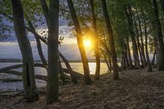 19 (sashura vysotsky) Tags: россия волгоград сарпинский волга закат река лес солнце nex