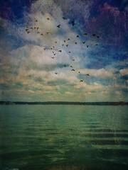 31/52 (yosmama151) Tags: sky birds clouds water lake thunderbirdlake oklahoma oklahomaphotography oklahomaphotographer iphone iphone6s iphoneography iphoneographer distressedfx textured snapseed 52weeks 52weekproject