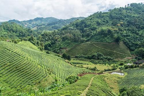 mae salong - thailande 2