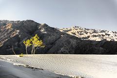 Stoic (garshna) Tags: trees sanddunes deathvalleynationalpark mesquitesanddunes sky mountains