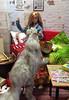 Down with the sickness (Elrenia_Greenleaf) Tags: barbie barbiephotostory barbiediorama dolldiorama dollroom onesixthscale 16 max juno