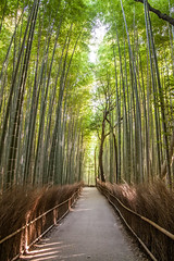 Arashiyama (Ingo Tews) Tags: japan japanese japanisch tree trees green gruen bamboo forest bambus wald outdoor heiter pflanze sun sonne sunlight sonnenlicht gegenlicht backlight kyoto arashiyama grove arashiyamabamboogrove empty