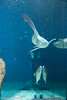 IMG_0655 (10Rosso) Tags: acqua acquario genova pesci pesce mare acquariodigenova aquarium genovaacquarium