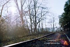 (yoannpupat) Tags: automne fujisuperia200 leicacl summicron50mm