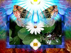 Nature (mfuata) Tags: nature doğa life hayat light ışık butterfly kelebek flower çiçek leaf yaprak sun güneş symmetry simetri harmony uyum