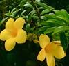 Flores en Desaru