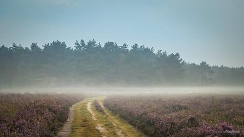 Karavaan in de mist