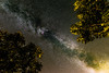 Staring through the trees (mfavk) Tags: tree milkyway milky way night sky nightscape beautifull light nature stars universe dynamic range nikon d3300 sigma 1835 long exposure stack ngc astrometrydotnet:id=nova2205262 astrometrydotnet:status=failed abigfave