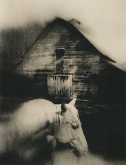A Horse Called Memory (micalngelo) Tags: analog alternativeprocess alternativephotography lithprint lithprocess moerschlith fujigf670 acros100 fujifilmacros horse montana