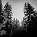 Through+the+trees+-+Romania+-+Black+and+white+photography