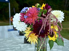 Outdoor Wedding Reception:  Floral Gifts from the Neighbors' Gardens (Ginger H Robinson) Tags: outdoor wedding reception floral arrangements gifts colorful flowers sunflowers chrysanthemums greenery friends gardens august summer washington pacificnorthwest