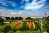 かもめの車窓から有明海を望む (abk10002) Tags: motog5plus landscape blue green flower japan sky 風景 空 かもめ 電車 train