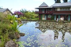 Vue arrière (RarOiseau) Tags: laréunion saintleu eau jardin parc architecture reflet saariysqualitypictures v4000