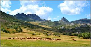 Vacas en el valle de Maraña - León