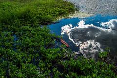 Reflet au lac de Roue (Maxime Bonzi) Tags: wood france queyras ciel nature water nuages reflect bois photographie bleu blue roue montagne reflet cloud photography lac sky vert eau photo green mountain