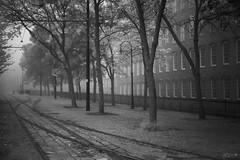(Mr. Tailwagger) Tags: leica m10 tailwagger lowell ma railroad tracks cobblestones trolley summiluxm asph 50mm black chrome