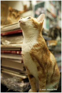 Sam Kee The Cat Bookstore 森記圖書 - Hong Kong XP7218e
