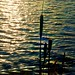 Reedmace (tina negus) Tags: culverthorpe typha