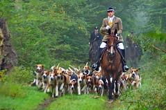 Vénerie (Phil du Valois) Tags: vénerie piqueux chasse forêt domaniale chien meute compiègne veneur