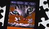 No Missing Pieces ! (Caroline.32) Tags: macromondays evolution nikond3200 extensiontube12mm 50mm18 ipod cat puzzle puzzlepiece eyes macro