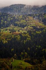 Overwhelming nature (coagator) Tags: nature forest road dirtroad mountain mountainside zlatar srbija serbia landscape planina novavaros fog wer rain canon6d outdoor green colour spring