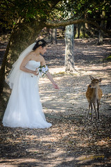 The Bride and the Deer (CAscotPhotography) Tags: cascotphotography bride deer wedding weddingdress flowers trees girl japan japanesegirl forest portrait nikon d7100