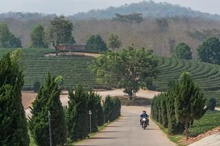 mae fah luang - thailande 22