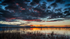 Pelican City 2 whoops DSC_5222 (BlueberryAsh) Tags: wtp birds australianbird australianpelican pelican westerntreatmentplant pointwilson sunset cloudsstormssunsetssunrises water pond lake nikond750 nikon24120