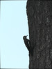 A Question of Balance — Summer 2017 (Paul Henegan) Tags: bark bird rainyday sky tree taijitu