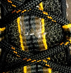 Lace on my hiking shoe (neukomment) Tags: stayinghealthy macromonday lacing macro shoe hiking walking 100xthe2017edition 100x2017 image78100