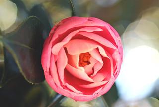 Flower and bokeh