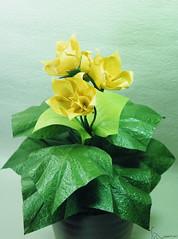 Stardrop (adam tran) Tags: origami