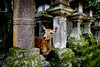 Nara, temple des 1000 lanternes, sanctuaire de Kasuga