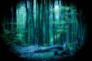 Enchanted Forest - HSS!