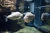 IMG_0712 (10Rosso) Tags: acqua acquario genova pesci pesce mare acquariodigenova aquarium genovaacquarium