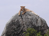 DSCN4619 (David Bygott) Tags: africa tanzania serengeti natgeoexpeditions 170718 lion rock kopje