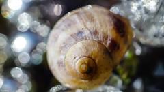 Snail (YᗩSᗰIᘉᗴ HᗴᘉS +7 000 000 thx❀) Tags: snail escargot macro sony helios helios442 bokeh bokehlicious beyondbokeh hensyasmine