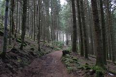 FÛTEE. (Diké) Tags: retour oeuvre horizons tentes parcours un peu difficile traversée jolie forêt été 2017 brök dikée