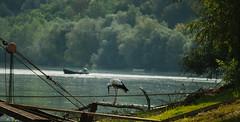 Stork (2) (Inka56) Tags: stork bird river danube boats 7dwf landscapes