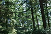 2017-08-28 cannock chase 006 (sonya.britton) Tags: cannockchase staffordshire ancientforest wood forest walk family tree