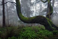 Mt Warrenheip (Mark McLeod 80) Tags: australia ballarat fog markmcleod markmcleodphotography vic farm frost rural winter