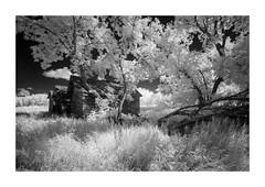 Three sheds (Sandra Herber) Tags: infrared manitoba prairies